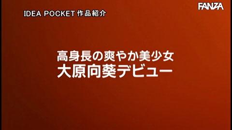 大原向葵-022